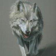 mad wolf